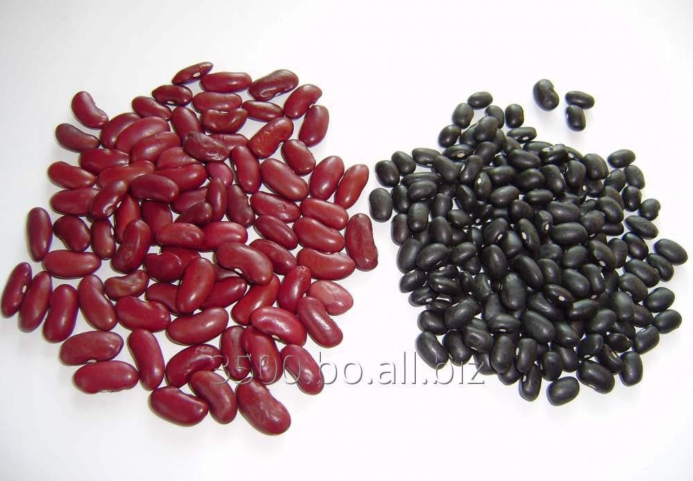 Comprar Frijoles Negro Y Rojo