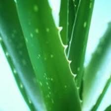 Shampoo Extracto de Aloe Vera