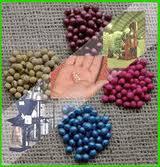 Tratamiento de Semillas Vendaval - Thicarb