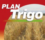Plan trigo