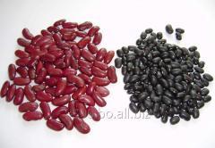 Frijoles Negro Y Rojo