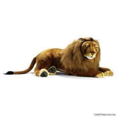 Lion couché 100 cm