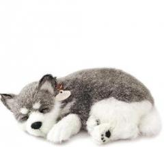 Alaskan Husky-Peluche Perfect Petzzz-La mascota