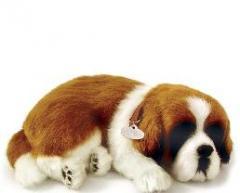 San Bernardo - Peluche Perfect Petzzz - La mascota
