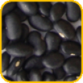 Frijol Negro
