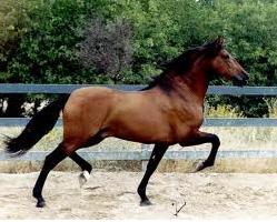 Pedido Paseos a caballo